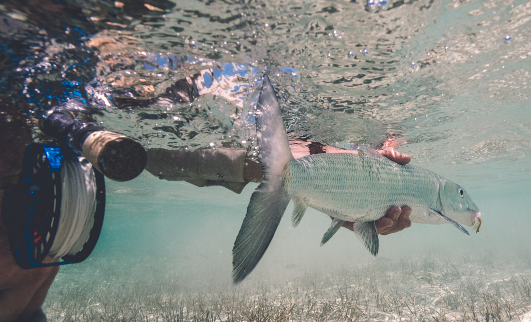 Will_Graham_Abaco_Lodge_Flyfishing-37