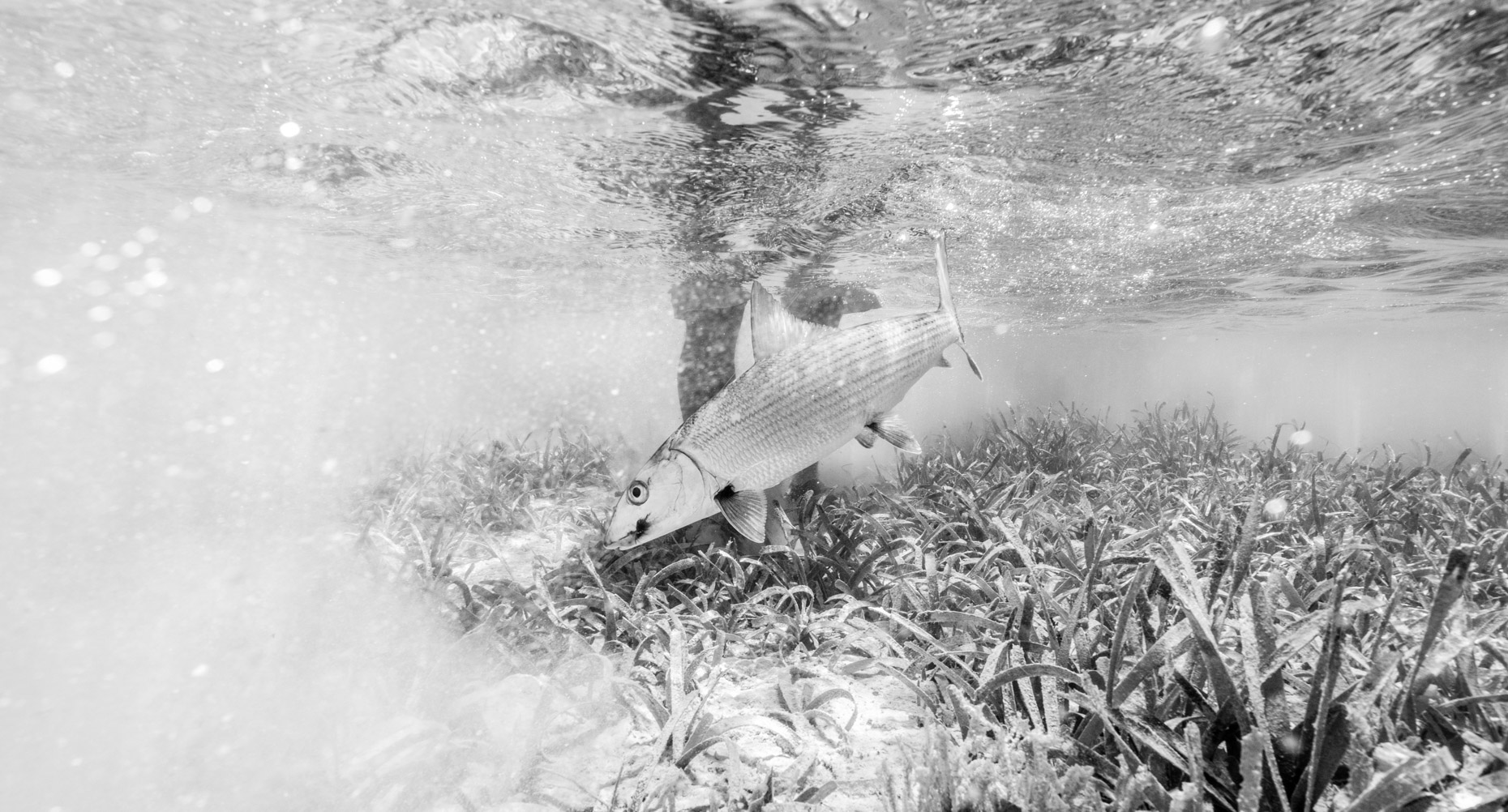 Will_Graham_Tailwaters_FlyFishGuanaja_3_18-255